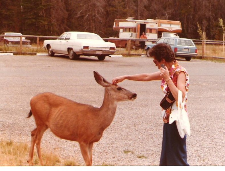 1984-08-11-red-rock-canyon-waterton-lakes-josie-and-deer