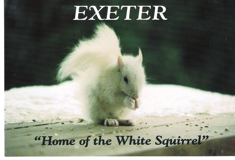 1990s-exeter-white-squirrel