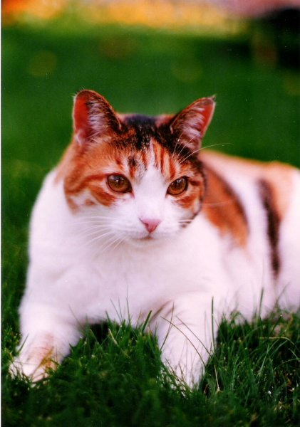 1994-08-08-cat-pumpkin