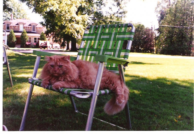 1996-08-08-ginger-lylas-cat-next-door