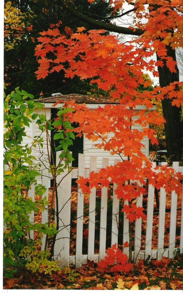 1999-10-16-tree-in-josies-yard