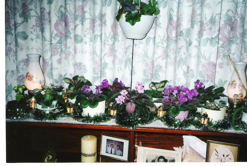 2001-12-josies-african-violets-in-bloom