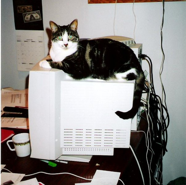 2004-08-14-gracie-on-dougs-computer