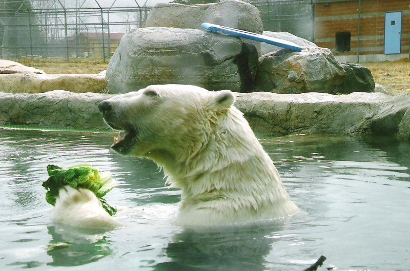 2007-04-30-cochrane-polar-bear-habitat