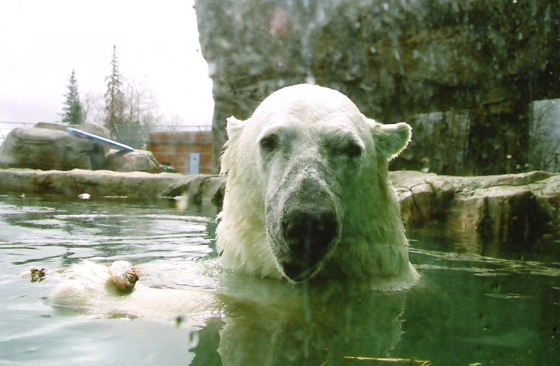 2009-04-30-polar-bear-habitat-cochrane-on