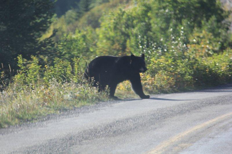 2013-09-16-2-bear