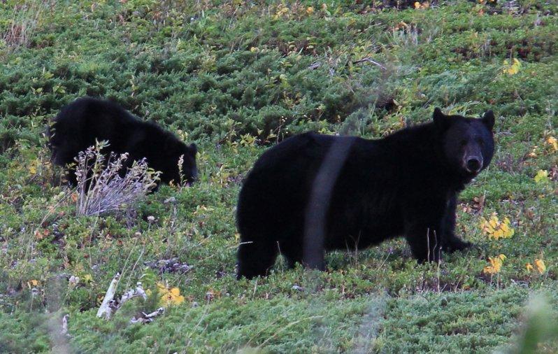 2013-09-16-21-bear-img_4146