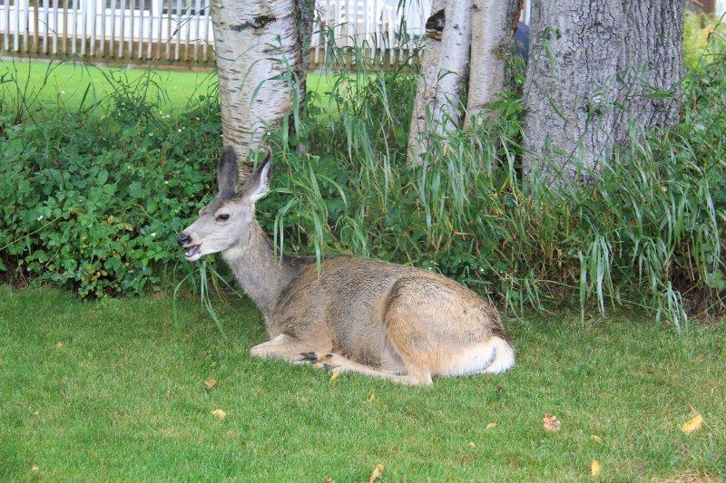 2013-09-16-45-deer-img_3917