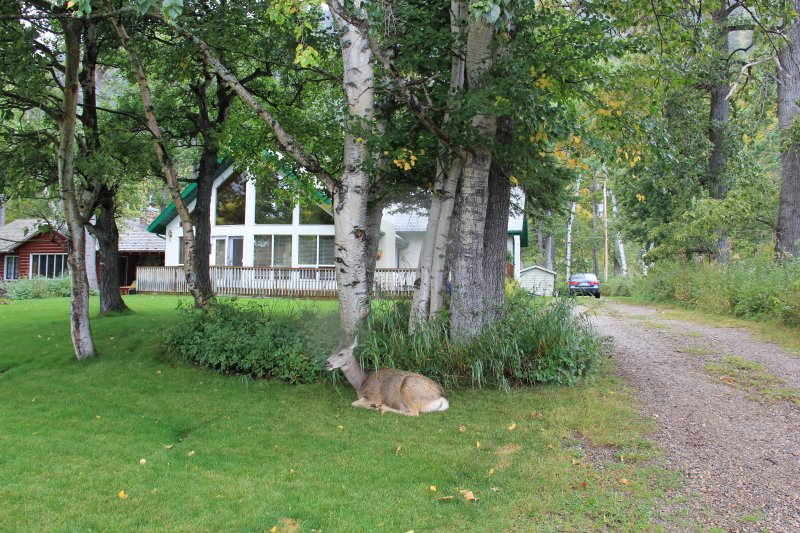 2013-09-16-46-deer-img_3918