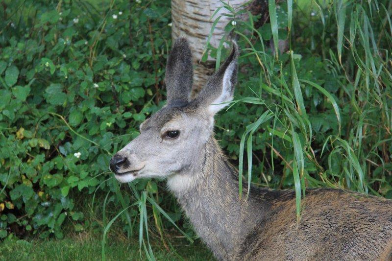 2013-09-16-47-deer-img_3919