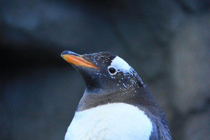 2013-09-22-12-penguin-img_5166