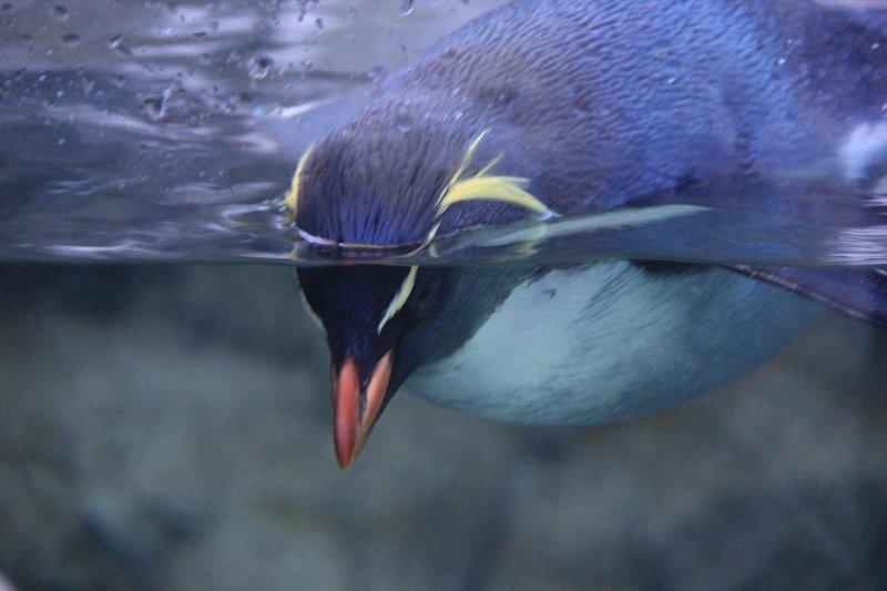 2013-09-22-14-penguin-img_5178