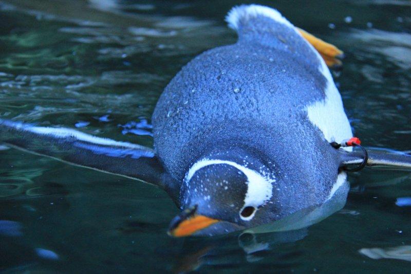 2013-09-22-20-penguin-img_5190
