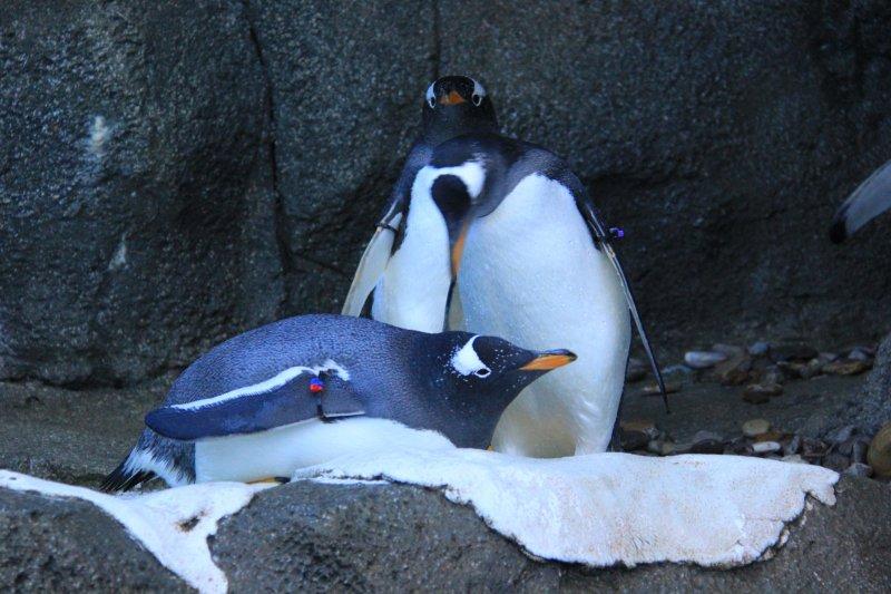 2013-09-22-21-penguin-img_5198