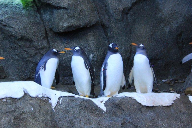 2013-09-22-22-penguin-img_5202