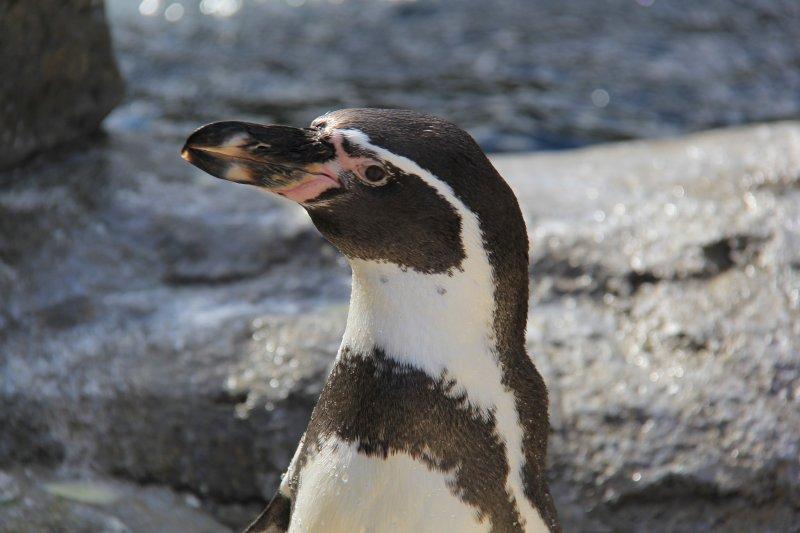 2013-09-22-24-penguin-img_5527
