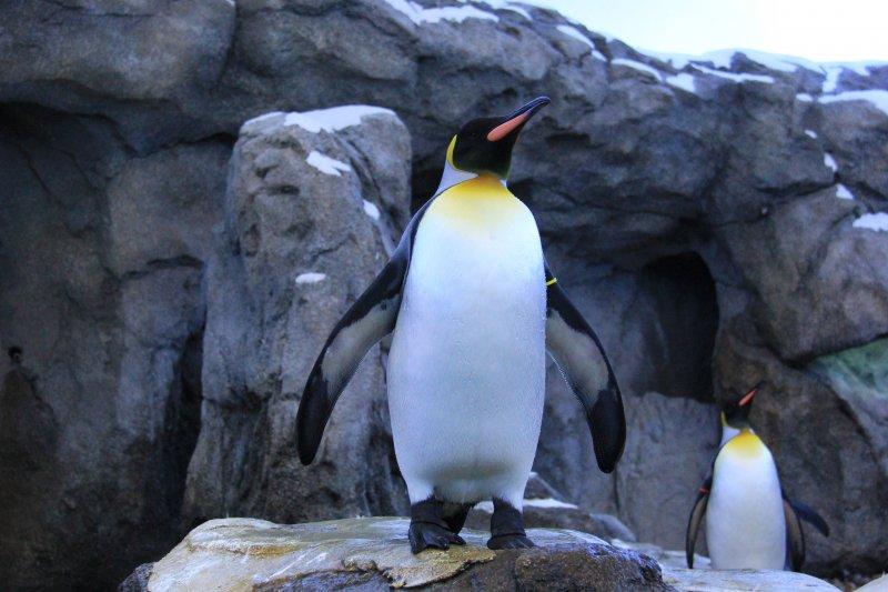 2013-09-22-28-penguin-img_5576