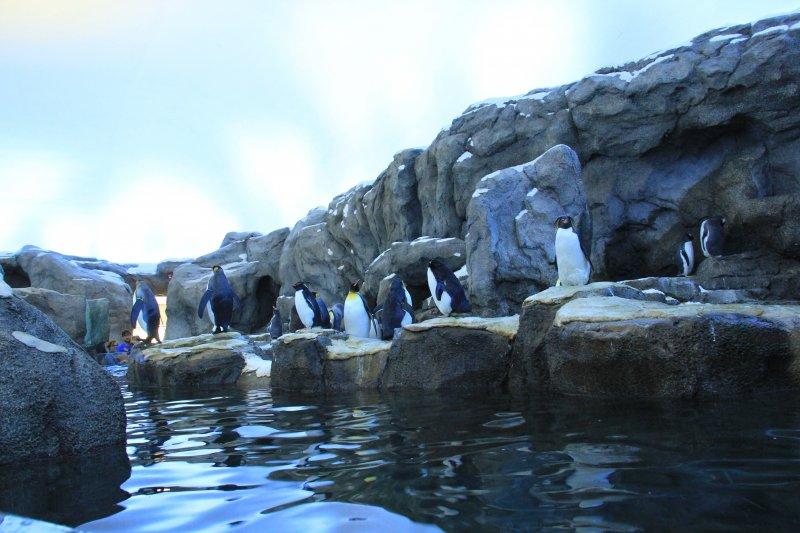 2013-09-22-29-penguin-img_5567